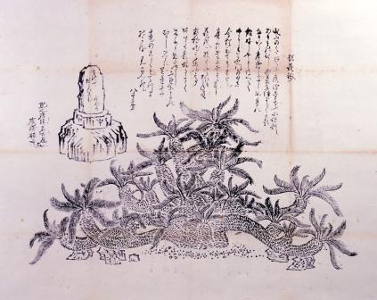 広沢寺蘇鉄の図