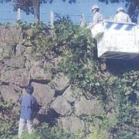 ボランティアによる佐賀城石垣の草刈が行われます