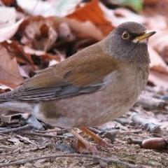 博物館・美術館セミナー「佐賀城公園 冬の野鳥観察」