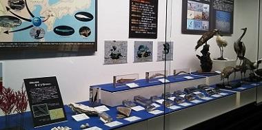 有明海の生物展示の様子