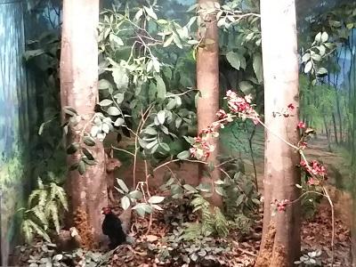 森林の生きものたちのジオラマ