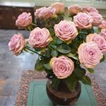 アトリエでは週替りのバラが展示されています(3月26日~31日)