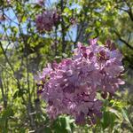 佐賀城公園、花の便りが届いています!
