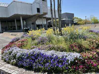 佐賀城公園の花々(入り口前の寄せ植え)