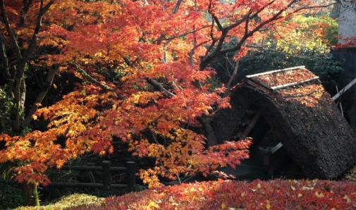 「アラカシ広場」の紅葉