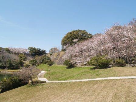名護屋城跡の桜2